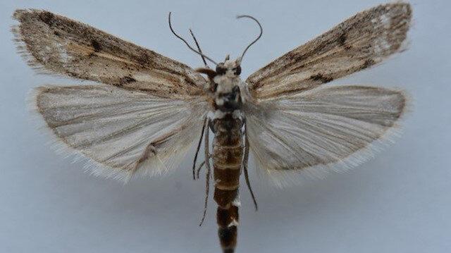اكتشاف صنف جديد من الفراشات شرقي تركيا