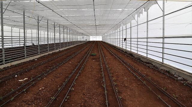 فواكه وخضروات شانلي أورفة التركية تزين موائد أوروبا