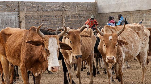 جمعية تركية توزع لحوم الأضاحي على آلاف المحتاجين في كينيا