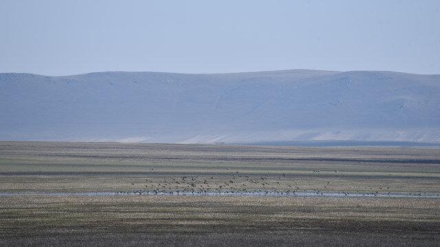 """تركيا.. الطيور المهاجرة تعود إلى بحيرة """"كويوجوك"""" بعد فترة جفاف"""