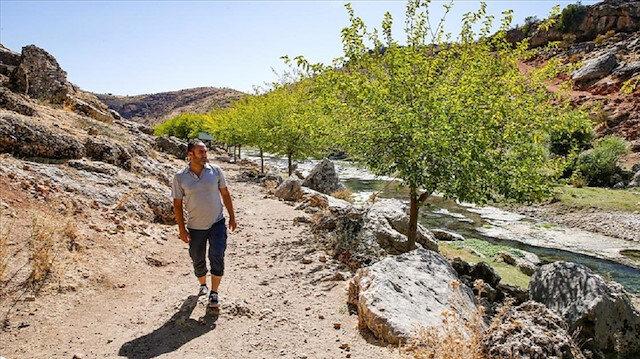 زرع 10 آلاف شجرة.. مواطن تركي يحول أرضا قاحلة إلى حزام أخضر