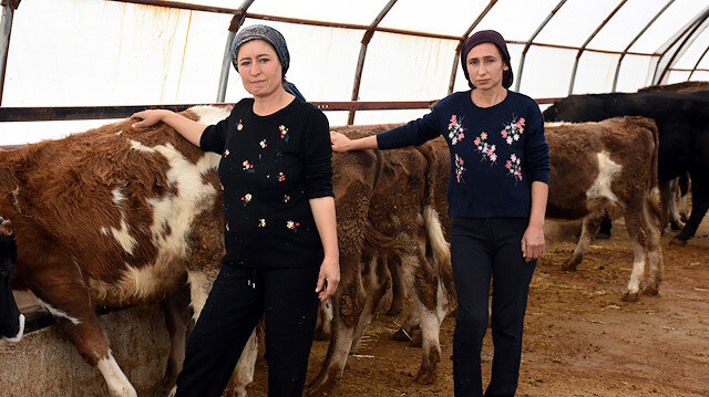 Üniversite mezunu kız kardeşlerin başarısı: Devletten aldıkları destekle baba mesleği hayvancılığı sürdürüyorlar