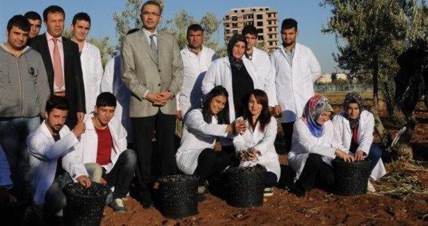 Üniversiteliler Zeytin hasatında