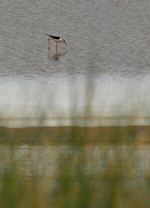 Tersakan gölü canlanıyor