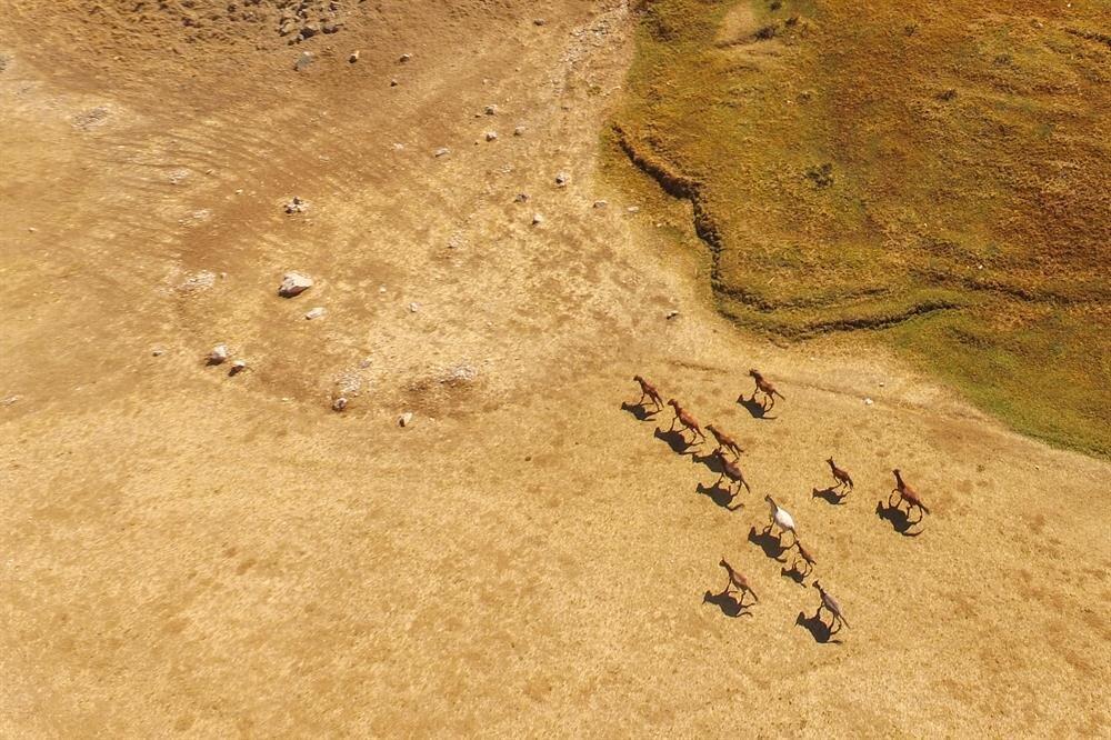 Horses migrate to Turkey's Van in winter