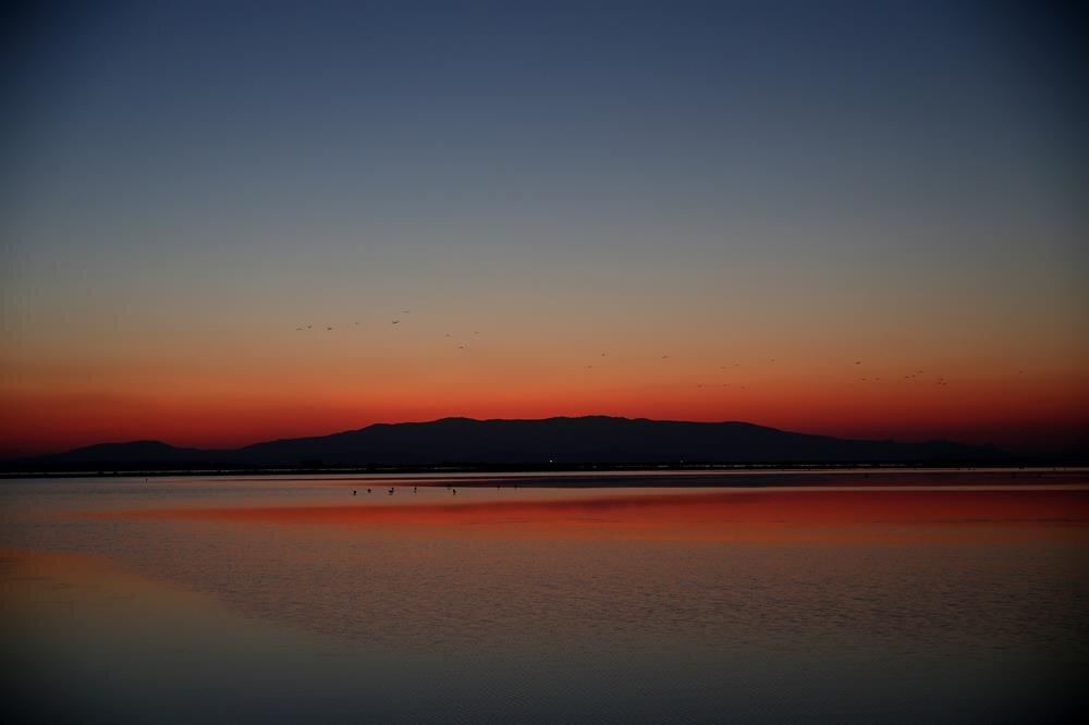 Flamingos in Turkey's Gediz Delta