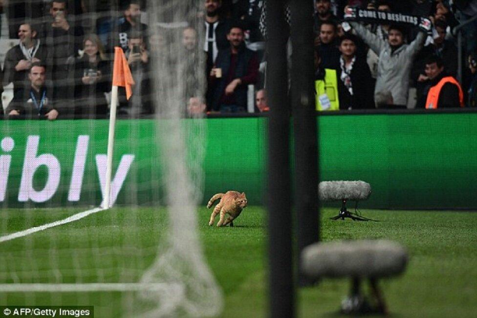 Cat voted 'Man of the Match' as Bayern Munich defeats Beşiktaş in UEFA Champions League