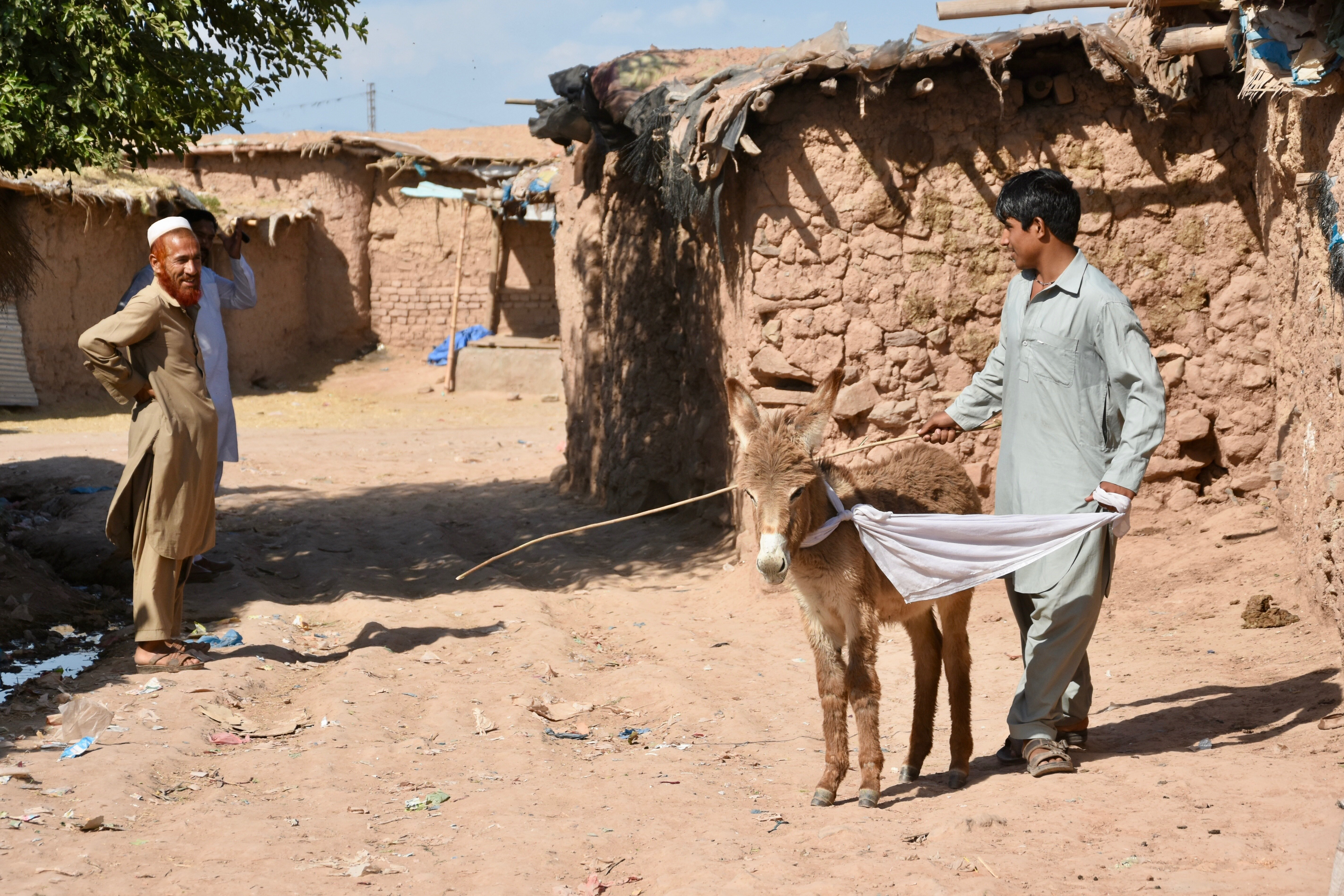 Pakistan to earn millions in donkey exports to China