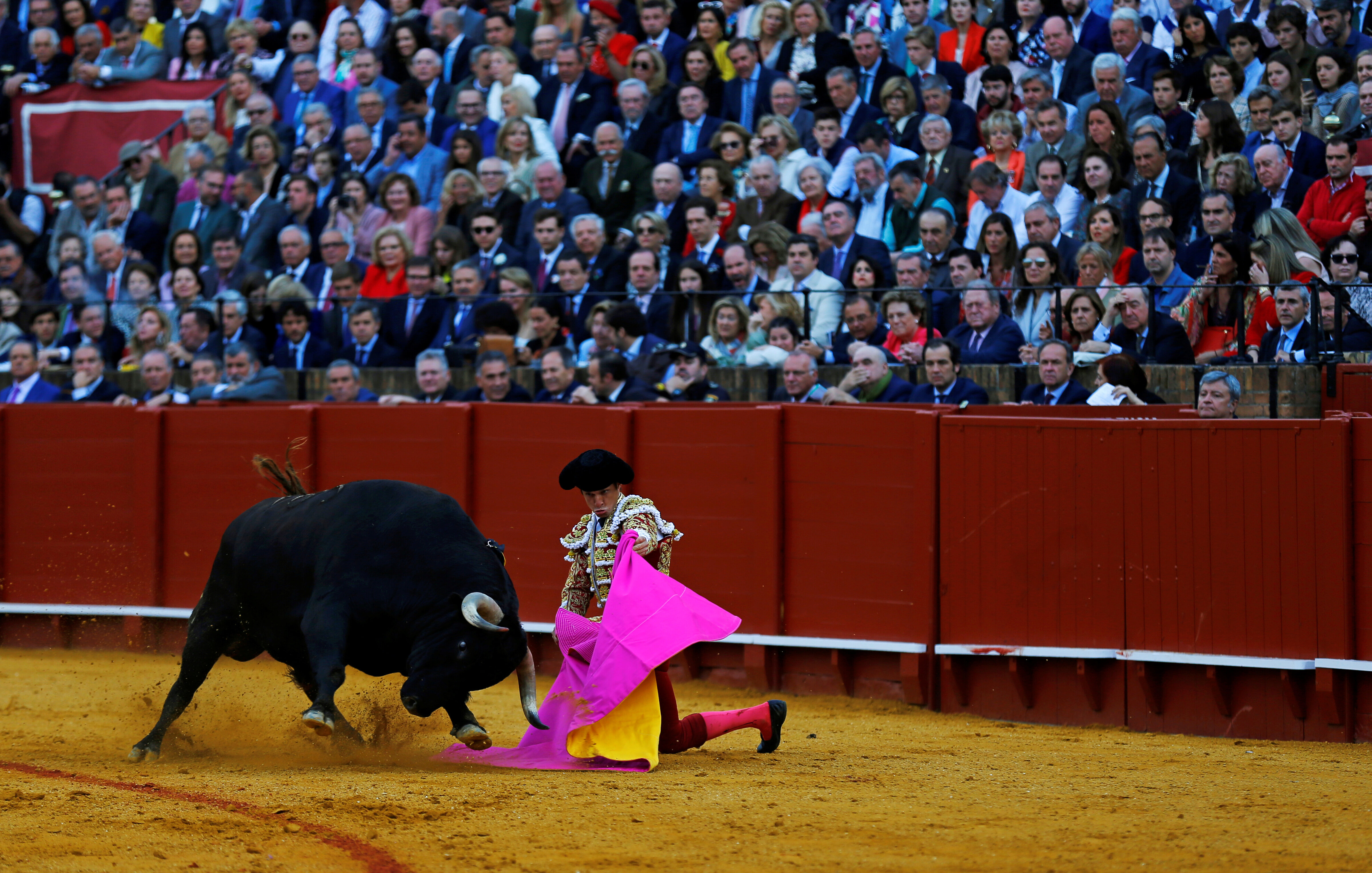 Famous matadors perform talents during a bullfight in Seville