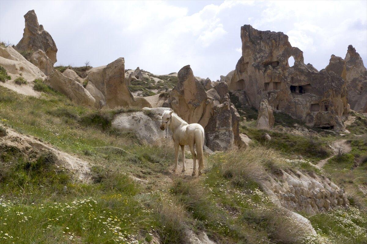 كبادوكيا التركية تحتفي بالربيع دون سياح بسبب كورونا
